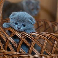 Крохотный котёнок в корзине