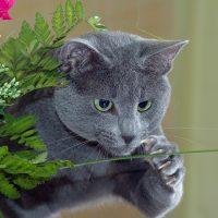 Кот ловит стебелёк
