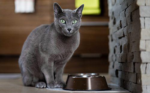 Кот сидит у пустой миски