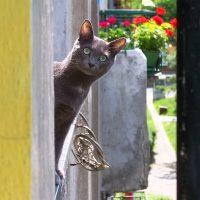 Смешная кошка высунулась из окна