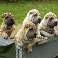 Четыре собаки в контейнере