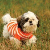 Пёсик в полосатом свитере