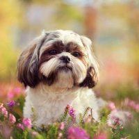 Собачка среди цветов