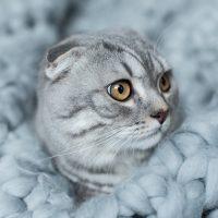 Серая кошка на сером покрывале