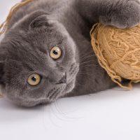Кот играет с клубком