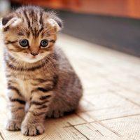Смешной маленький котёнок