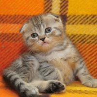Котёнок сидит на диване
