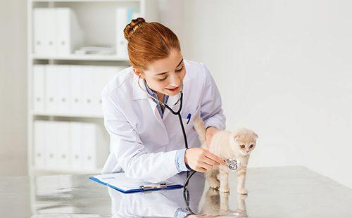 Девушка-ветеринар осматривает котёнка