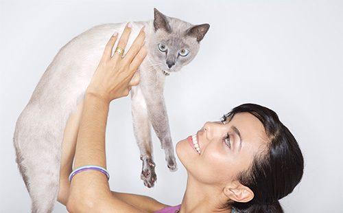 Сиамский кот на руках у девушки