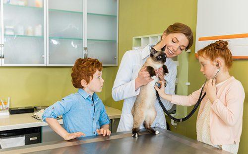 Сиамский кот у ветеринара