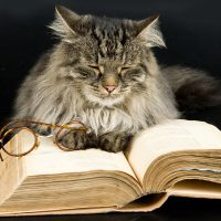 Кот заснул над книгой
