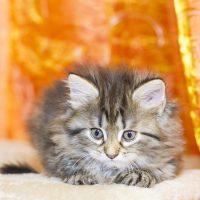 Котёнок на оранжевом фоне