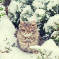 Кот в заснеженном лесу