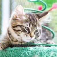 Котёнок на когтеточке