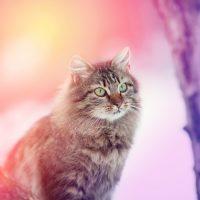 Кот в розовых лучах заката