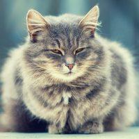 Пушистый кот зажмурился