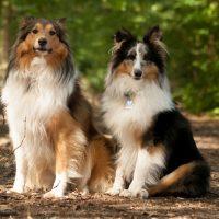 Две собаки сидят на дороге