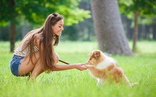 Девушка играет со щенком колли