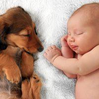 Щенок и младенец спят рядом