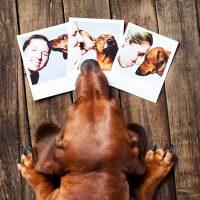 Смешная собака смотрит на фото хозяйки