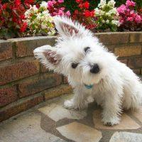Уморительный пёсик в саду