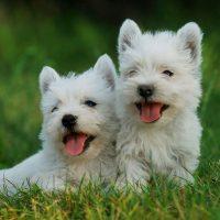 Два милых щенка на траве