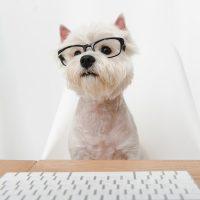 Смешной пёсик в очках