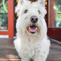 Портрет породистой собачки
