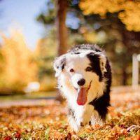 Разноцветная собака гуляет по поарку