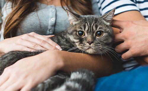 Кот в любящих руках