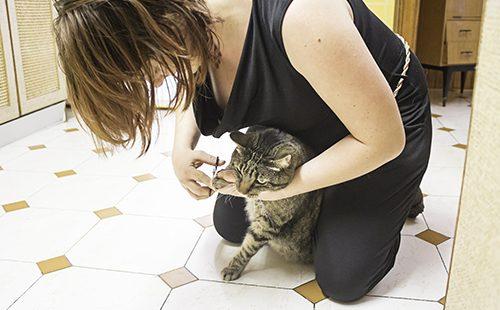 Женщина стрижёт кошке когти