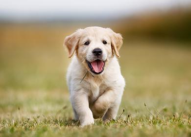 Клички для собак