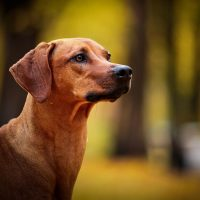 Пёс в осеннем лесу