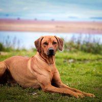 Пёс отдыхает на берегу