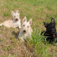Три любопытных щенка