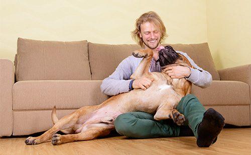 Хозяин играет с собакой