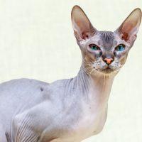 Портрет грациозной кошки