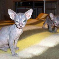 Два серьёзных котёнка