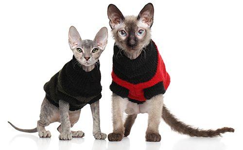 Два котёнка в свитерах