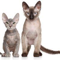 Два позирующих котёнка