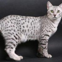 Красивый полосатый кот