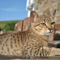 Кот лежит на солнышке