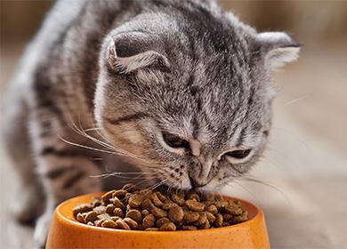 Как правильно кормить кошку сухим и влажным кормом