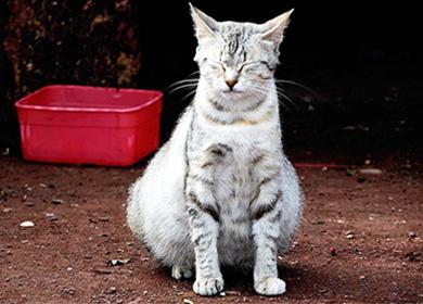 Как беременеют кошки