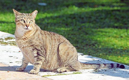 Беременная кошка на улице