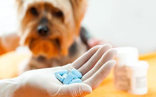Голубые таблетки в ладони врача