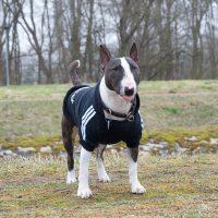Пёс в спортивной курточке