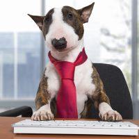 Пёс за офисным столом