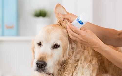 Капли при заболевании ушей у собаки