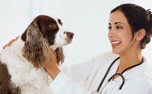 Собака на примере у ветеринара